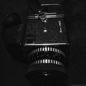 shoot-436